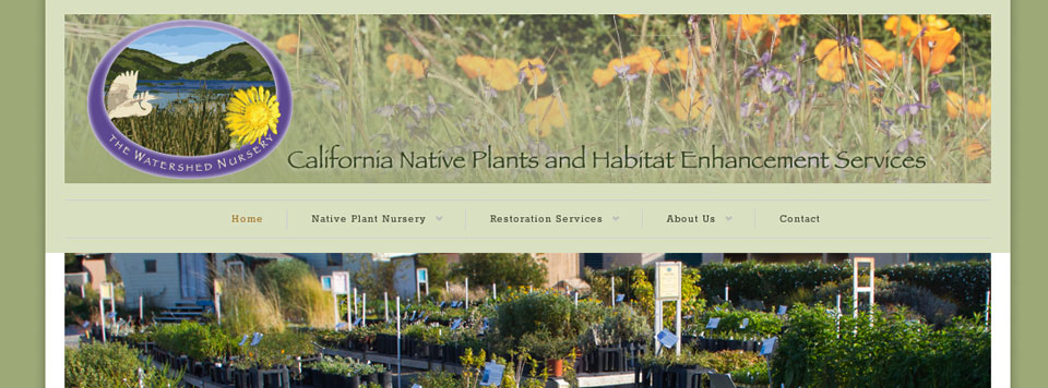 Logo Update and Website Design: The Watershed Nursery